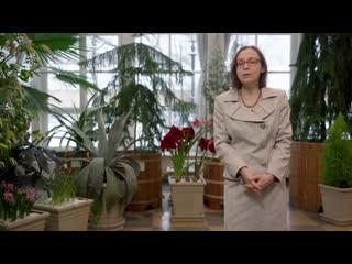 Экскурсия по оранжерее в «Царицыно»