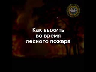 Как выжить во время лесного пожара