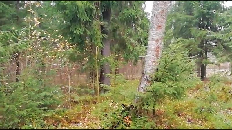ФУТАЖИ БЕСПЛАТНО ДЛЯ МОНТАЖА лес лето осень река береза река 5необычныхподарков идеяпоздравления