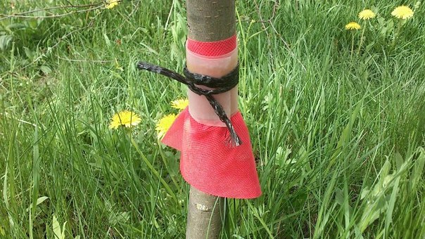 Защита от муравьев.  Дачники, столкнувшиеся с появлением муравьев в...