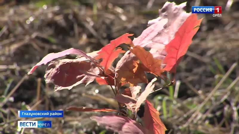 На Орловщине высадили 3 тысячи саженцев красного дуба