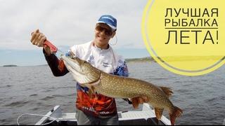 Поймал много рыбы! Крупная щука и судак на джиг. Лучшая летняя рыбалка!