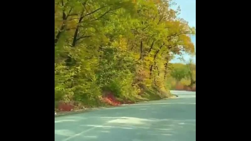 Сейчас дороги в лесах особенно красивы Не сидите дома наслаждайтесь осенью Repost @ • • • • •Кизиловое
