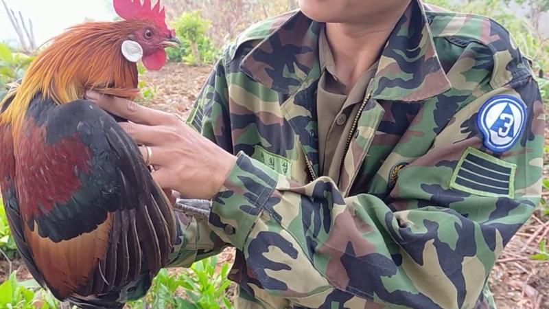 Mới bắt được em gà rừng rặt làm lọc các bạn thấy giọng có được không bẫy gà sáng 3132020