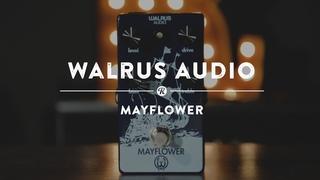 Walrus Audio Mayflower   Reverb Demo Video