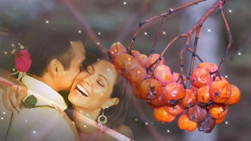 безумно трогательная песня о любви Ион Суручану Куст рябины