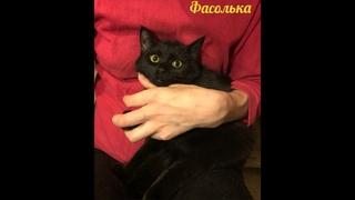 котенок Фасолька ищет дом. Приют Петербург