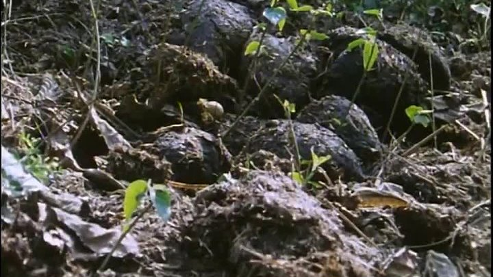 BBC Невидимая жизнь растений 1 Путешествие Документальный 1995