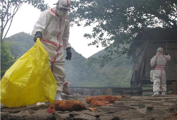 10 лучших фильмов про смертельные эпидемии