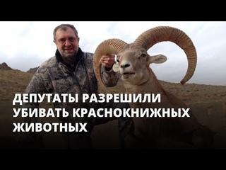 Депутаты разрешили убивать краснокнижных животных