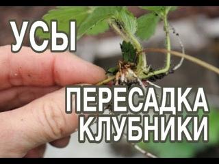 youtube_video_191096313-2021-07-27-05-45-09