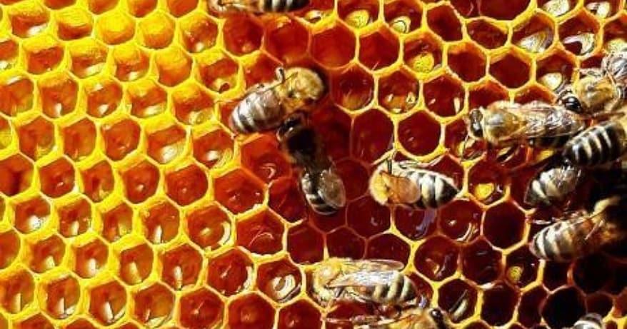 Пчеловодам на заметку