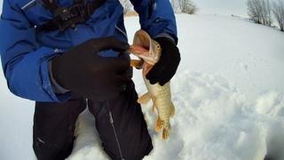 Рыбалка на щуку жерлица зимой