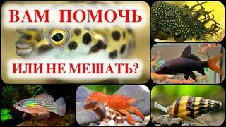 Самые полезные обитатели аквариума. Аквариумные помощники