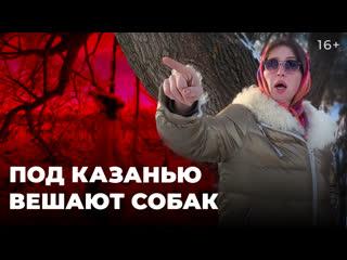 Ритуальное убийство? Живодеры в Татарстане повесили собаку на дереве и вырвали ей язык