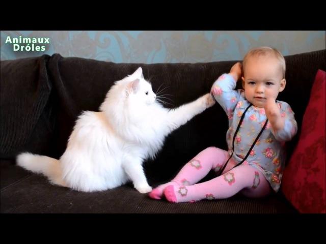 Nette Katzen und Babys Kuscheln Babys Lieben Katze Kompilazion