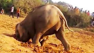 Слон 11 часов роет яму в грязи и затем достает из нее что-то неожиданное