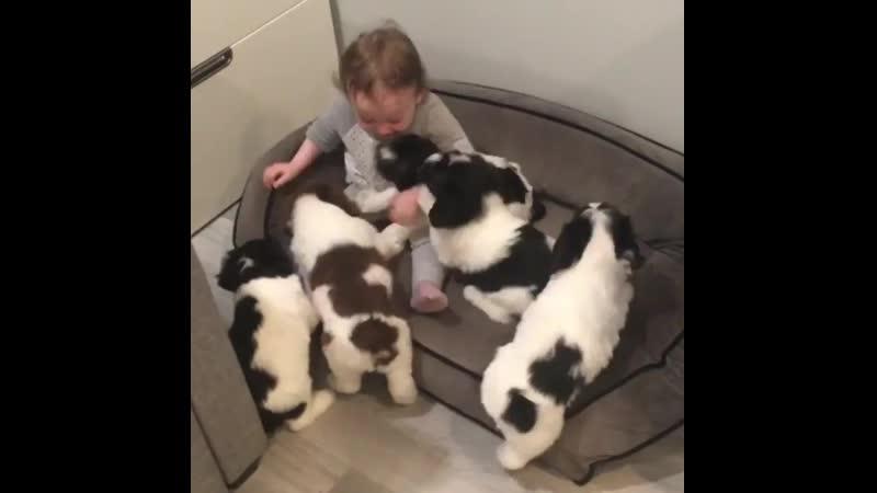 18 на девочку напала стая собак!