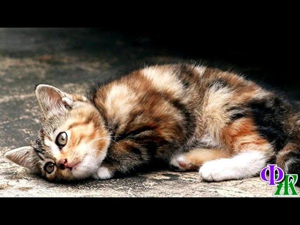 Незаметный КОТ умер ночью дрожа от холода и пытаясь заснуть и согреться Просто перестал дышать…