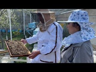 Uzbekistan! Самарканд ! Все о Пчёлах! Чем опасен укус пчелы? Весёлый пасечник ! Эксперимент.