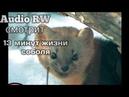Audio RW смотрит- 13 минут соболиной жизни