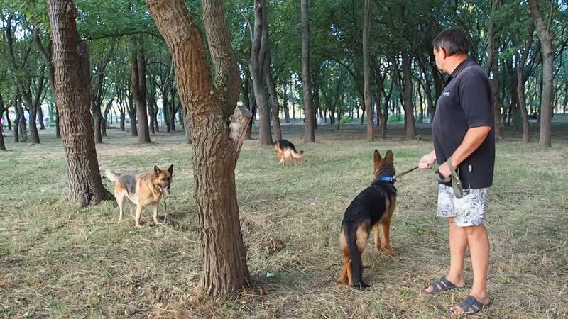 Дела собачьи