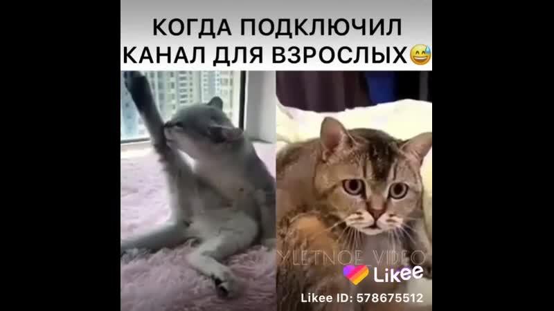 Like_6888346127661387116.mp4