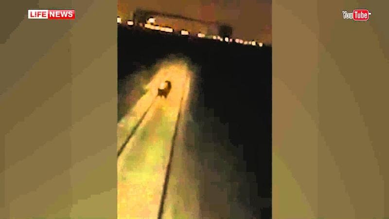 В Норильске машинисты сняли на видео как локомотив давит медведя HQ