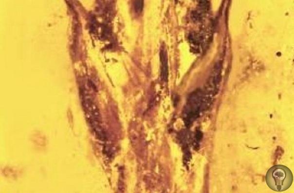 10 удивительных вещей, извлечённых из янтаря Миллионы лет назад деревья сочились липкой смолой, сохранявшей в себе всё, что в неё попало. Застывая, смолы обращались в янтарь и проносили сквозь