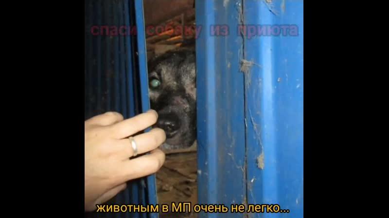 Лечение щенят в приюте как это было осень зима 2015 год mp4