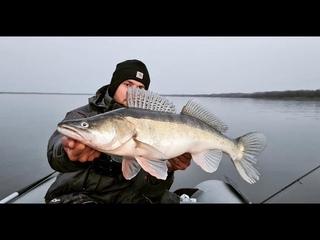 КРУПНЫЕ СУДАКИ НА КАЖДЫЙ ЗАБРОС! Жор МЕЧТЫ на Оби поздней осенью. Рыбалка ,джиг.