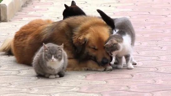 Матрена, Муся, Барбос и Мотя... Жалобный плач услышали все кошки одновременно. Вернее, кошек было две Матрена, Муся. Плюс кот, их верный друг и соратник Мотя. Они мигом отыскали в густой