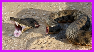 10 Craziest Animals That Can Live On After Death!