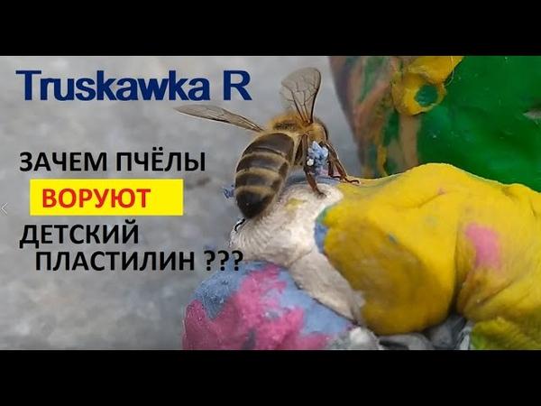 Пчёлы злостные воровки детского пластилина Что они из него лепят TruskawkaR