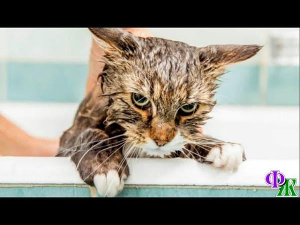 Кот и Человек 2 Не зря люди такое безобразие со мной сотворили понял кот нигде не чесалось