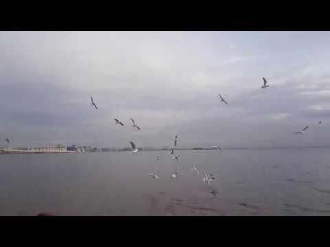 Lapalux Talvi - 4EVA (Fan Video)
