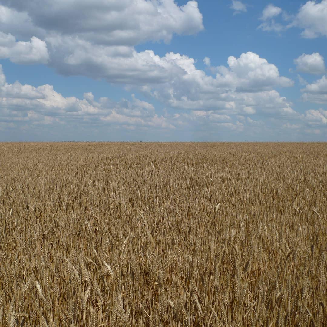 В рамках товарных интервенций Министерство сельского хозяйства России направит до 1,5 миллиона тонн зерна для реализации на внутреннем рынке