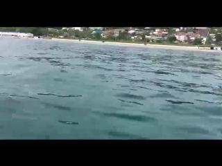 Дельфины в Сочи. Мать дельфина не может оставить своего мёртвого детёныша