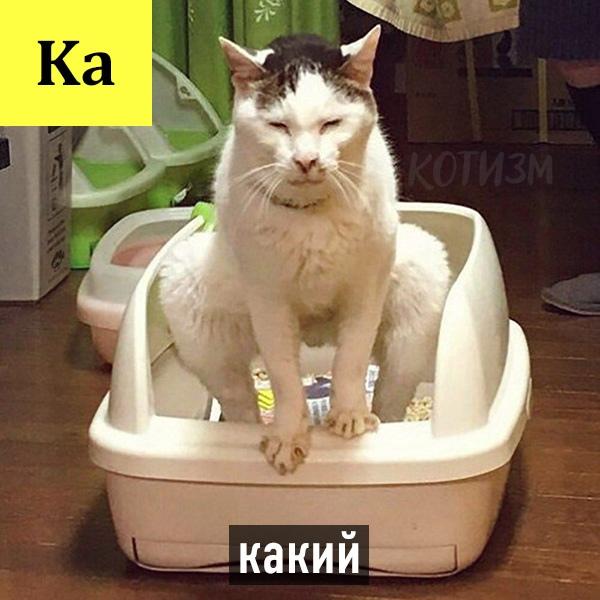 Периодическая система кото-элементов