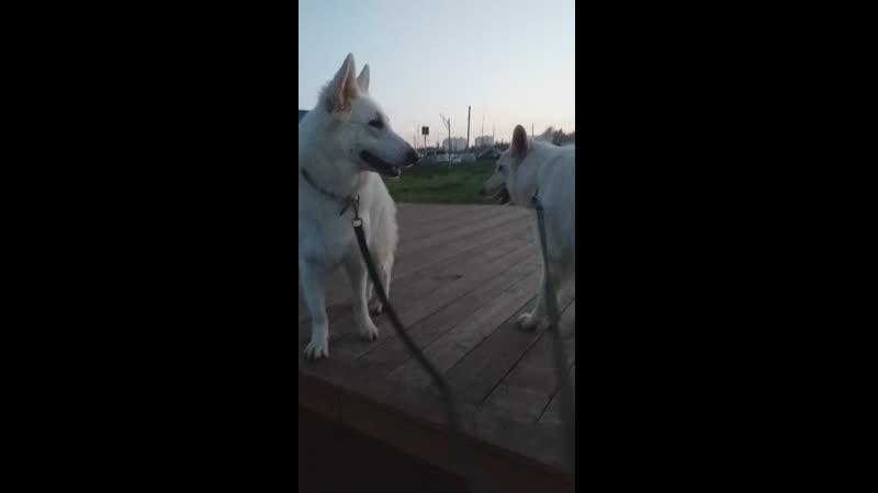 Бела и Бети