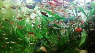 Мой аквариум на 180л