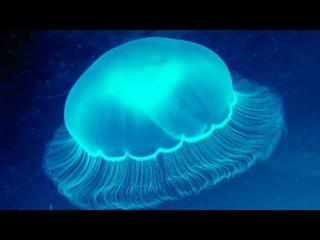 Мир медуз