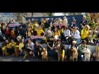 """""""Желтый флешмоб"""" любителей собак! Омск 11:00 сквер им. Дзержинского. #омичувсепоплечу #яомич #ОмскСтрим"""