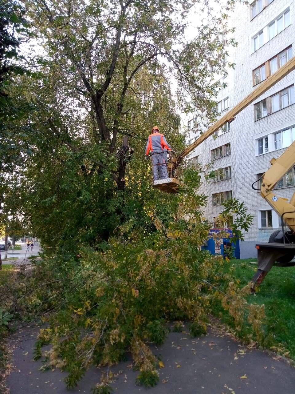 Улица Профсоюзная дом 78 снос аварийных деревьев