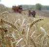 Выпуск следующего видеоролика про Сельское хозяйство в России.
