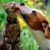 ♥♥♥Группа  любителей  животных!♥♥♥