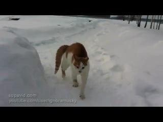 Страшный кот бродит по улицам в поисках жертвы!!!)))) Самый злой кот на свете!! Скоро и на улицах твоего гор