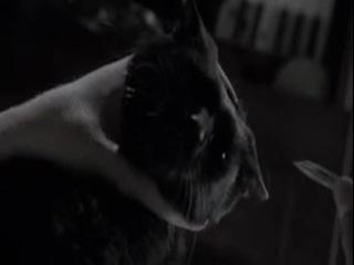 MOH -24 - El gato negro Castellano