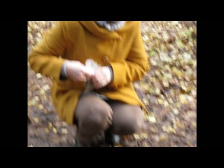 Белки в осеннем лесу