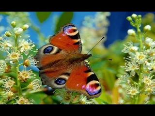 """""""Летающие Цветы""""- Бабочки !!! (Оркестр Джеймса Ласта)"""